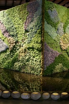 succulent wall in reflecting pool