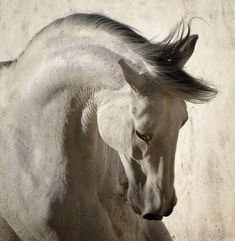 Amazing Beasts, Magnificent Beasts, Majestic Horse, Majestic Animals, Cute Horses, Pretty Horses, Horse Photos, Horse Pictures, Horse Head