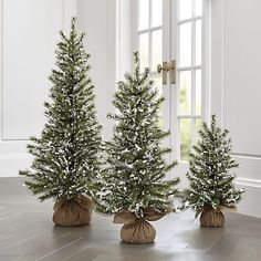 Flocked Pine Trees | Crate and Barrel - 1 large / 4 medium / 6 small