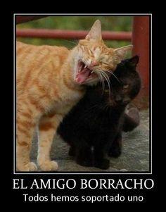 memes chistosos de gatos - Google Search