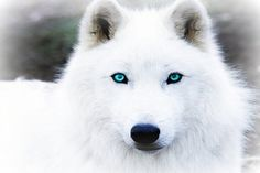 I am Daenerys. My mother, Armeina is half vampire half demon. My dad, Justin is a werewolf, alpha of his well our pack. I'm a very special child. I have the powers of a vampire but also the shifting ability of a werewolf.