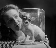 Vintage chihuahua - Pinned by Micki Giroux.