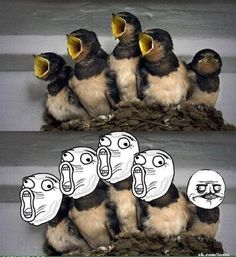 hahahahahah :D
