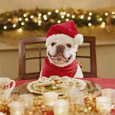 Christmas dinner for 10: Buffet ideas   eHow UK