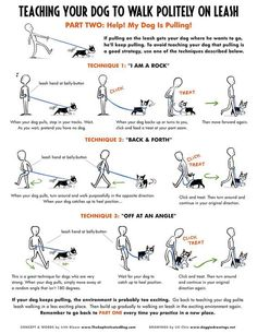 Teaching your dog to walk politely on leash. Great tips! Method one never seems to work for me!