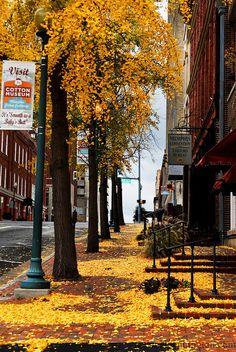 Downtown Memphis outside the Memphis Convention & Visitors Bureau in autumn.