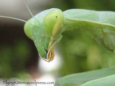 I love these guys from the flyingkitten blog, a @Triberr sister love