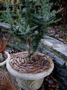 10 Best Pine Cone Mulch Images Plants Garden Landscaping Garden