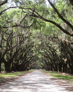 Entrance to Wormsloe Plantation, Savannah, Georgia