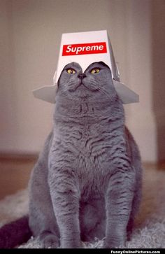 Supreme Kitty - #funny #lol #humor