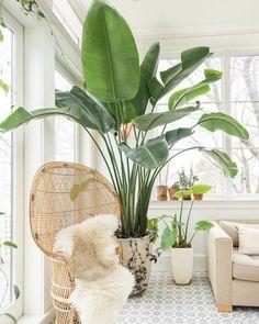 "7,385 Likes, 37 Comments - CASA CLAUDIA (@revistacasaclaudia) on Instagram: ""Bom dia! Se você ama plantas, que tal torná-las a protagonista do ambiente? Aqui, a Strelitzia…"""