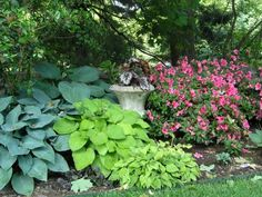 Various hostas with sweet garden urn and azaleas underneath tree canopy. garden-in-the-shade