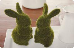 Bunnies + Moss