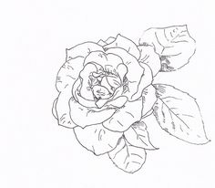 Draw a Rose with Fiber Tip Pen: The Finished Rose Pen Drawing