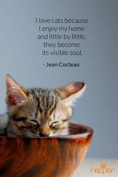 I love cats because i enjoy my home and little by little, they become its visible soul. - Jean Cocteau (http://www.hepper.com/best-cats-quotes-jean-cocteau/)