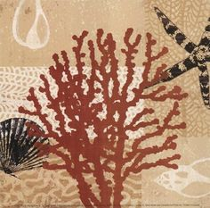 tandi venter framed prints sealife  | ... Sea Life > Mollusks > Starfish : Art Prints, Posters & Framed Prints