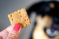 Carrot Cinnamon Cookies for dogs