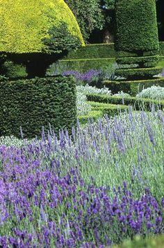 Lavender & boxwood .