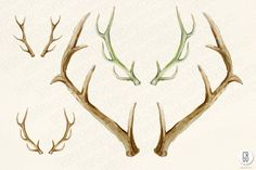 Watercolor flowers, deer antlers - Illustrations - 3