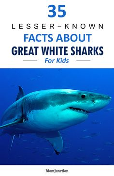 35 Lesser-Known Facts About Great White Sharks For Kids Great White Shark Facts, Shark Facts For Kids, Fun Facts About Sharks, Great White Shark Attack, All About Sharks, Sharks For Kids, Interesting Facts About Sharks, Shark Information, Shark Painting