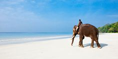 The remote Indian Andaman and Nicobar Islands lie to the east of the mainland and offer some of the most secluded and untouched beaches in the world. TripAdvisor rates Radhanagar Beach as the No. 2 beach in all of Asia. (Seven other Indian beaches also make the top 25.) While you're there, visit Elephant Beach to see these colossal animals bathing in the warm sea.