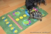 Kids Rugs, Dogs, Home Decor, Kid Friendly Rugs, Doggies, Interior Design, Home Interiors, Pet Dogs, Dog