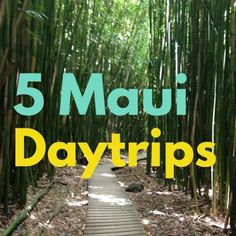 Things to Do in Maui: 5 Awesome Day Trips