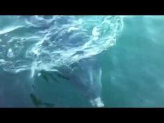 Dusty the Doolin Dolphin