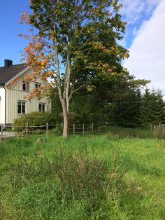 Landlig hus, høst, autumn, country house Country, Plants, House, Rural Area, Home, Country Music, Plant, Homes, Planets