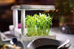 MicroFarms - Grow Your Own Micro Greens, Shoots, Herbs