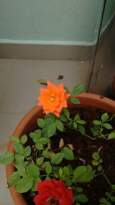 Flor laranja e flor vermelha no jardim minas