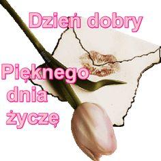 Wiersze,Gify Na Dzień Dobry ...: Gify na dzien dobry - kwiaty Good Morning, Buen Dia, Bonjour, Good Morning Wishes