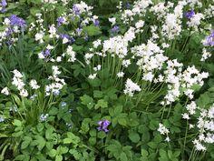 Mixed bluebells Little Acorns, Planting, Garden Design, Ideas, Plants, Landscape Designs, Thoughts, Yard Design