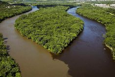 "The ""Meeting of the Waters"" on the Amazon River occurs about 8 miles from Manaus, Brazil, when the ""white"" Solimoes River meets the ""black"" Rio Negro."