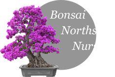 Bonsai Northside Nursery Logo. 15 devine ct. morayfield QLD closed Tuesday n wednesday