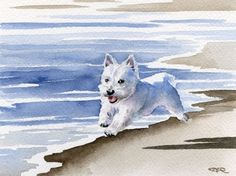 """West Highland Terrier This is a professional open edition Giclee' print by artist David J. Rogers.  Etsy $12.50    Print measures 8.5 x 11"""""""