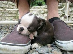 Can I sleep on your shoes?