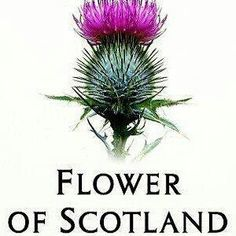 Scottish Thistle by leanne England Ireland, England And Scotland, Scottish Thistle, Scottish Highlands, Scotch, Scotland Travel, British Isles, Family History, Nature