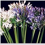Get classic and fresh cut flowers online from Whole Blossoms at excellent prices. Buy wholesale flowers for all your special events, weddings, birthdays, rehearsal dinners and many more.  For more information visit: http://www.wholeblossoms.com/fresh-cut-wholesale-flowers.html