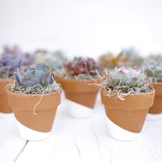 Succulents make the perfect gifts and favors for bridal showers and weddings! Add a name and they can double as a place setting. How cute?! By Dalla Vita.
