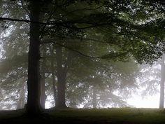 Ayer, cuando subimos, la Catedral aparecía cubierta de niebla....
