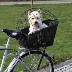 Trixie Rear-Mounted Bicycle Basket - Black: Bike basket with a wire mesh cover for use with dogs up to Basket bracket attaches to a rear pannier rack West Highland Terrier, Dog Bike Carrier, Biking With Dog, Bicycle Basket, Dog Basket For Bike, White Terrier, Bicycle Accessories, Small Dog Accessories, Accessories Online