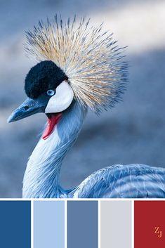 ZJ Colour Palette 269 #colourpalette #colourinspiration