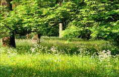 Wildwiese im Mai - Jahreszeiten - Galerie - Community