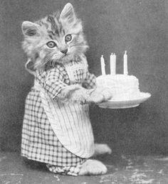 Gatos vestidos como personas - Happy birthday cat