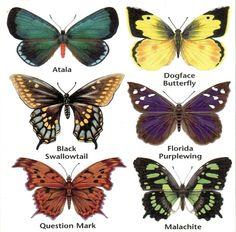 ButterflyInfo1-764x753.jpg (764×753)