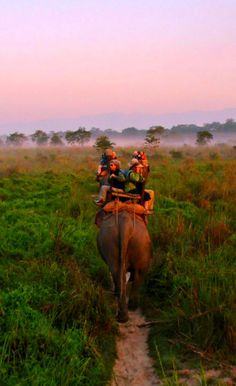 Chitwan National Park is undoubtedly one of the best places to visit in Nepal. It is a sanctuary for rare and endangered species like one-horned rhinoceros and the Bengal tiger.