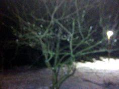 Trees :)