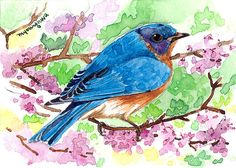 ACEO Limited edition of 1/25 Bird in redbud Bluebird by annalee377