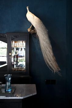 A Taxidermy White Peacock at the Hotel St. Cecilia in Austin, Texas this white peacock is beautiful Blue Rooms, Blue Walls, Dark Walls, Indigo Walls, Dark Rooms, Mood Board Inspiration, Color Inspiration, Albino Peacock, Taxidermy Decor